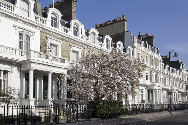 Urban tree: London houses with a magnolia tree.