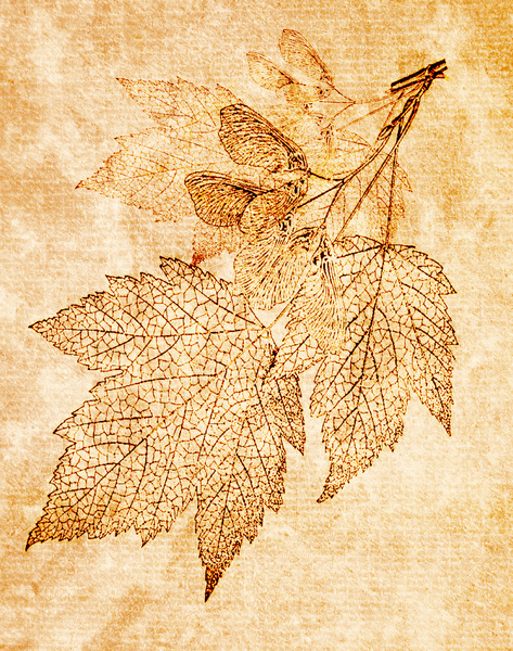 Botanical background: Botanical drawing was used for an interesting texture