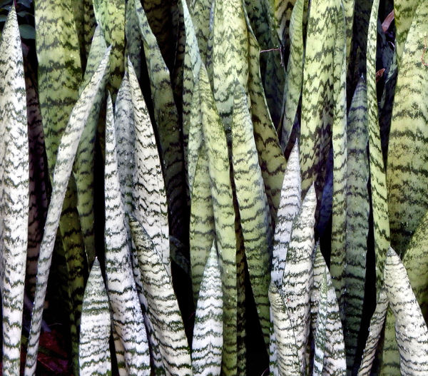 colorful background foliage8: mottled garden foliage display