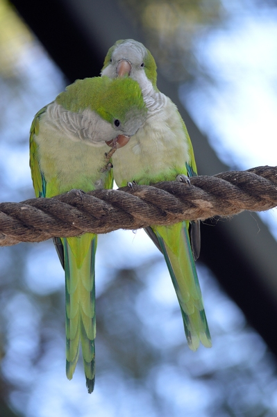 Love birds: A couple love birds