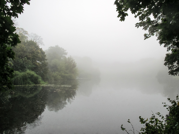 foggy autumn lake 2
