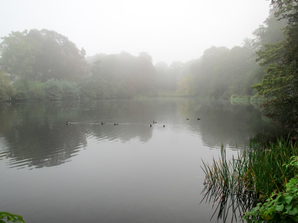 ducks on a foggy lake 2
