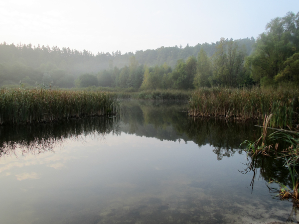 foggy pond scenery