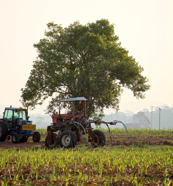 Farm Machinery and Tree: Tractors on a sugar cane farm under a tree, with young cane in the foreground. You may prefer:  http://www.rgbstock.com/photo/oS97GjY/Sugar+Cane+Field