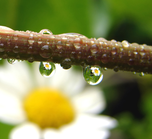 raindrops with flower reflecti