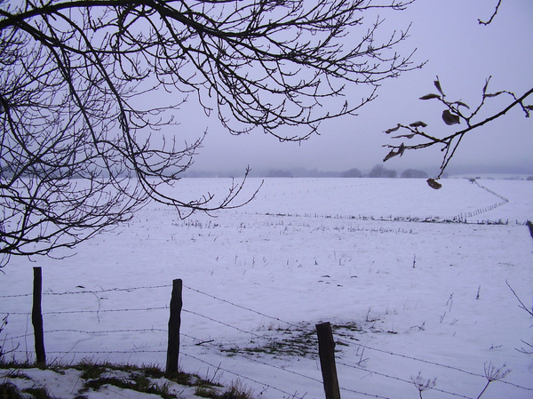 Winterscene 2: A view on snowy pastures in the Ardennes, Belgium