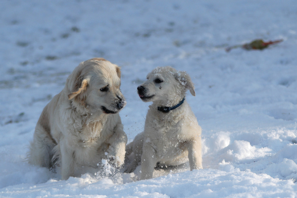 Dogs in the snow 4