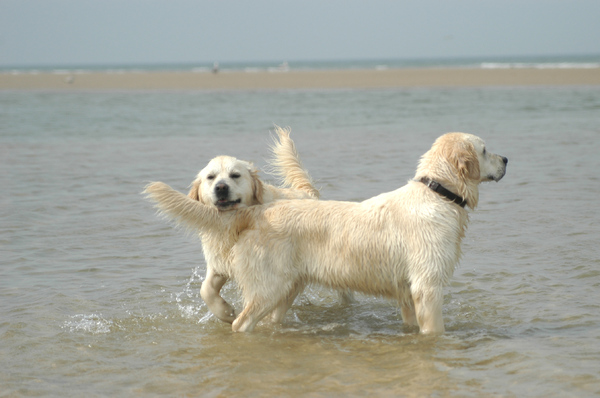 Dogs at the sea side 2