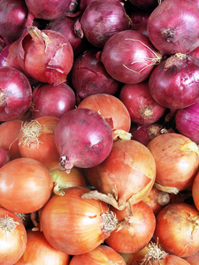 Onions: purple and brown onions