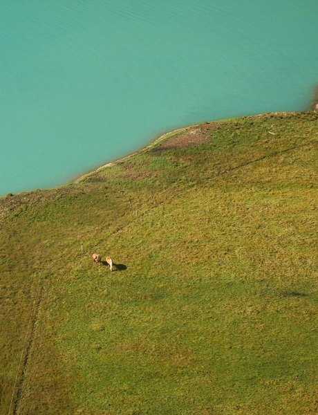 Horses from above-: Two haflinger horses next to a mountain lake from above.