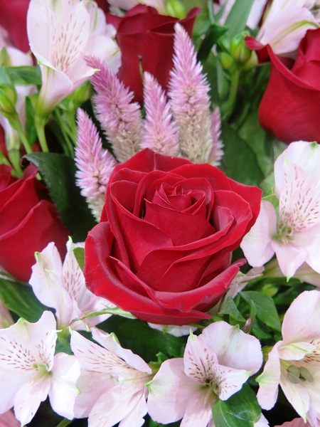 beautiful red rose: red rose flower mixture