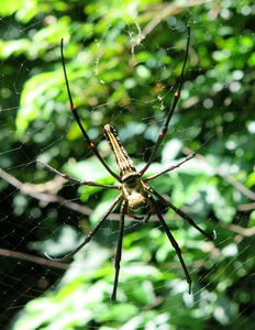 forest big spider: forest big spider