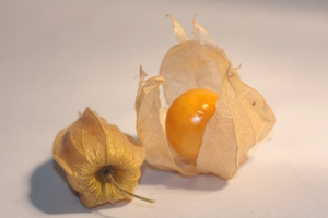Physalis alkekengi 3: Physalis alkekengi (bladder cherry, Chinese lantern, Japanese lantern, or winter cherry; Japanese: hōzuki), is a relative of P. peruviana (Cape gooseberry), easily identifiable by the larger, bright orange to red papery covering over its fruit, which res