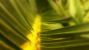 Palm: Depth of field over palm