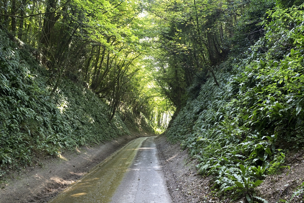 Sunken green lane: An old sunken green lane in West Sussex, England.