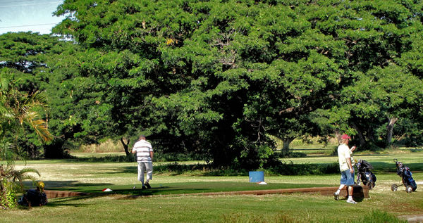 golf course movement4b: golfers on the move on public park golf course