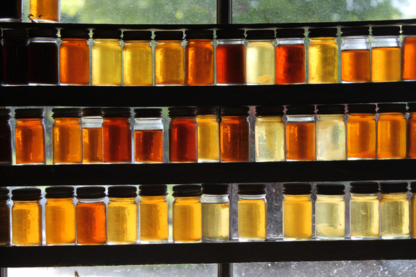 Colours of Maple Syrup