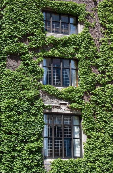 Ivy windows