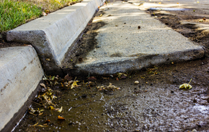 Curb Damage: A section of concrete curb and gutter moved up and out by tree roots.
