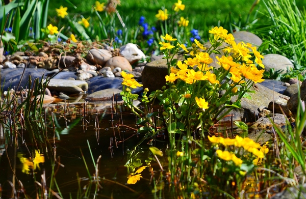 flowers on my pond: flowers on my pond