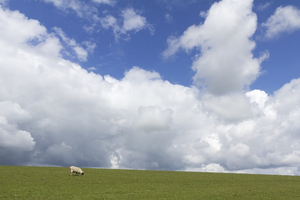Landscape: Landscape of the South Downs, East Sussex, England, in spring.