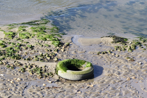Pollution: A tyre discarded in an estuary.