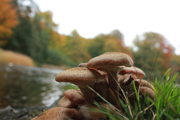 Autumn Mushroom: Danish mushrooms by a lake