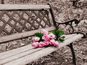Rose on Bench