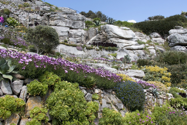 Rockery garden: The rockery garden on St Michael's Mount, Cornwall, England, in spring. Photography of this National Trust property is freely permitted.