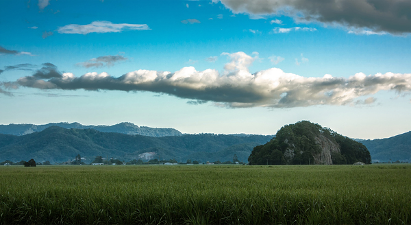 North Coast NSW Landscape: Early morning landscape near Murwillumbah NSW Australia