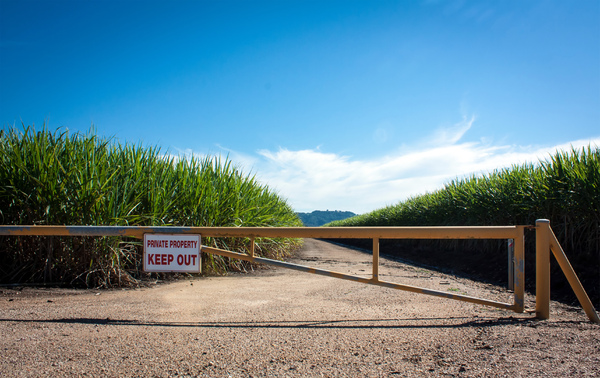 Sugar Cane Fields: Sugar cane Fields near Murwillumbah NSW Australia