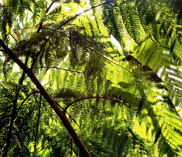 fern sunscreen2