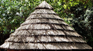 thatched roof2