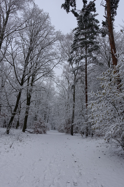 winter forest idyll 3