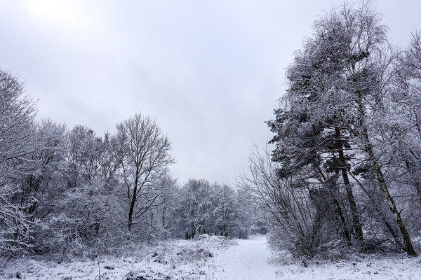 peaceful winter landscape 4