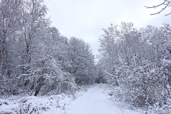 peaceful winter landscape 3