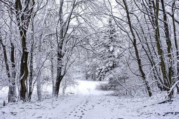 winter forest walkway 2