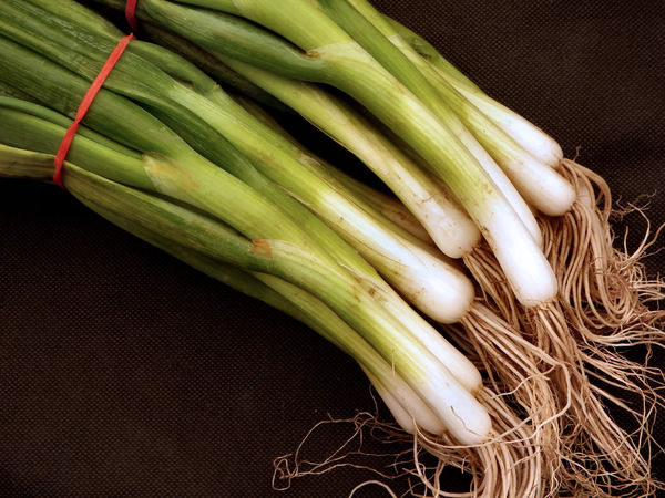 spring onion bunches2