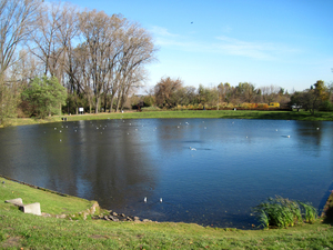 A pond in the Park