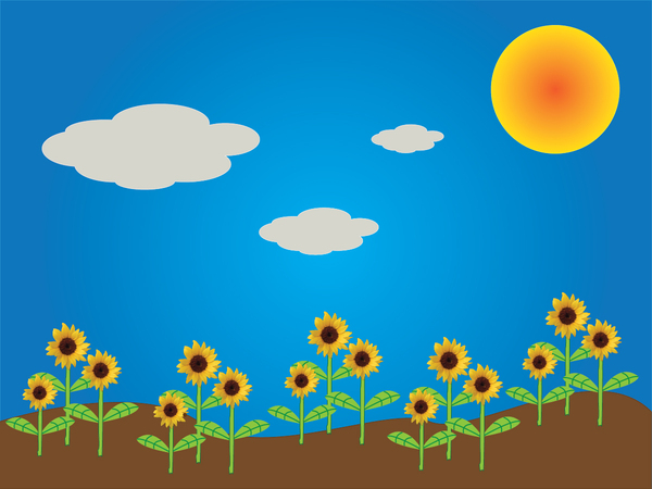 Sunflower scene 3
