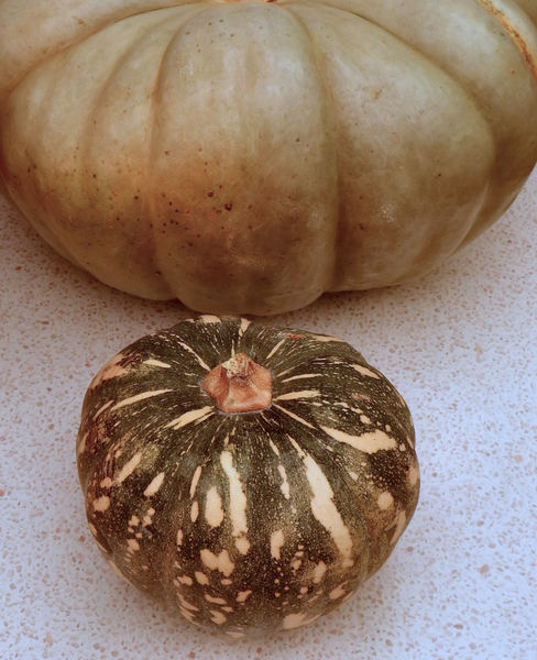 pumpkin varieties3: pumpkin varieties - Jarrahdale & Kent/Japanese varieties