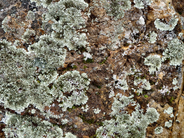 rocky surfaces24: rough and mixed rock surface elements & textures