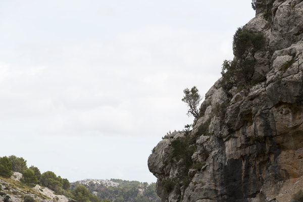 Trees on a mountain edge: Trees growing on the edge of a limestone mountain in Majorca, Balearic Islands, Spain.
