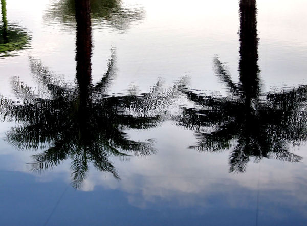 calm palm reflections2