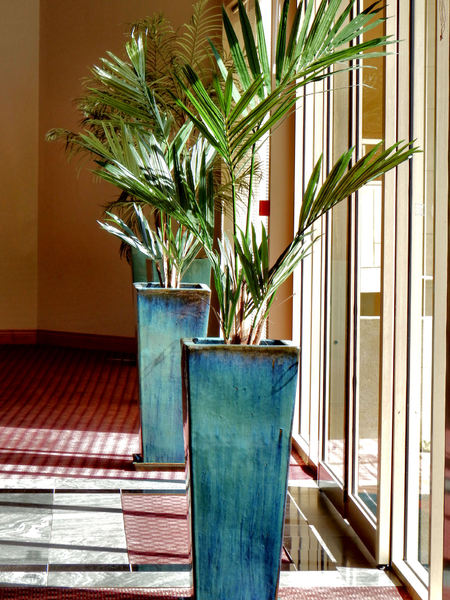 indoor potted palms