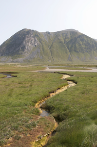 Marshy land: Marshy land on the Lofoten Islands, Norway.