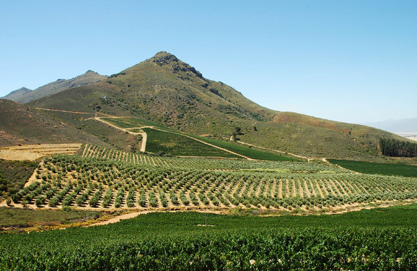 Winelands: Cape Winelands, South Africa.NB: Credit to read