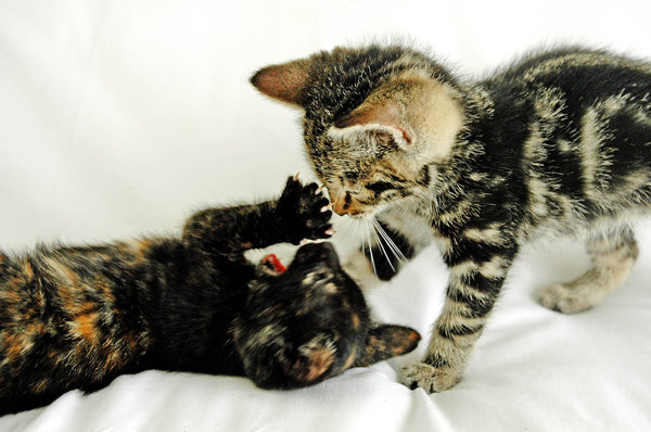 Speelse Kittens 2: