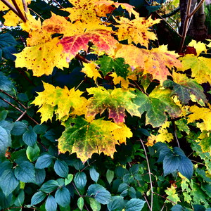 Leaves in Autumn: Autumn Leaves