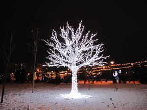 light tree: no description